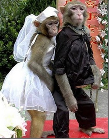 Funny Couple Monkey Couple Picture