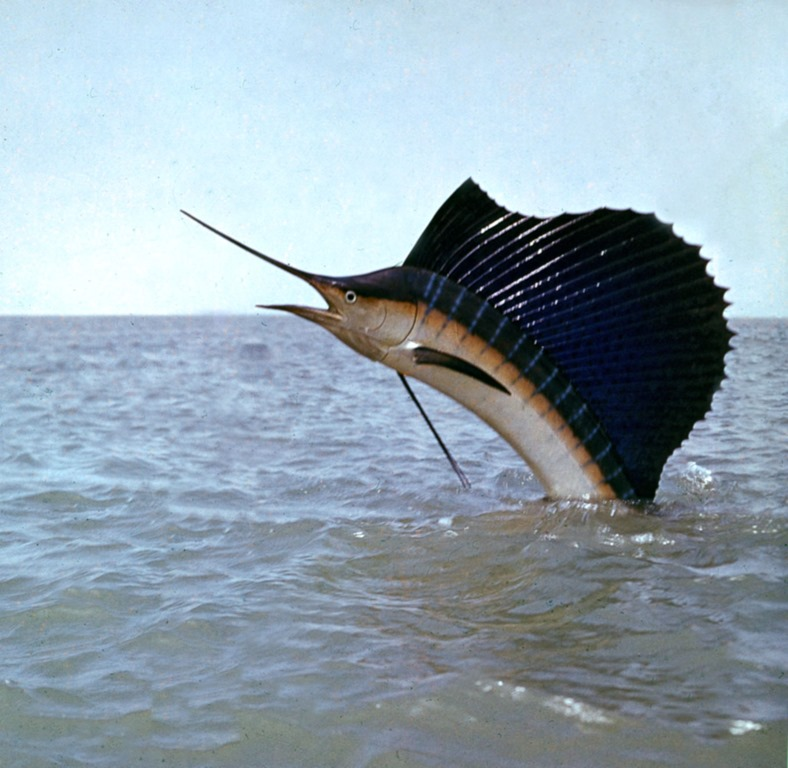 The world s fastest animals do what we want for Best fishing in the world