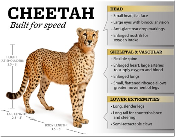 cheetah_speed