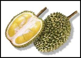 durian_fruit